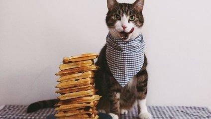 Ці котики вражають уміннями - фото 1