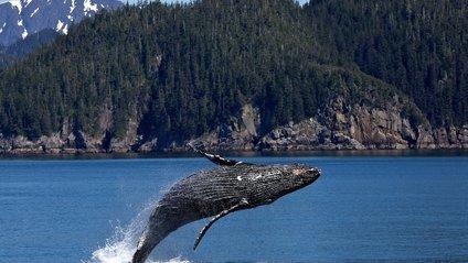 Горбаті кити з'явились біля тераси будинку у Канаді - фото 1