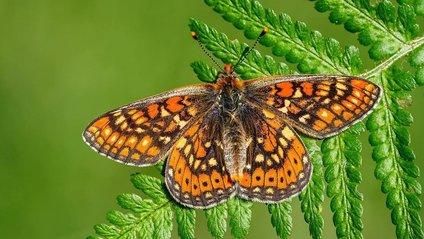 Адам Гор фотографує метеликів уже давно - фото 1