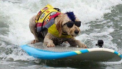 Журі оцінювало, як довго собаки змогли протриматися на воді - фото 1