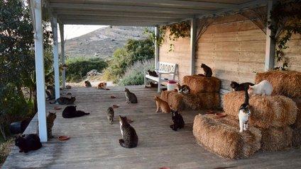 Потрібно буде доглядати за 55 котами - фото 1