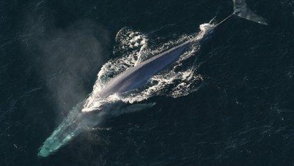 Відео з китами стало хітом мережі - фото 1