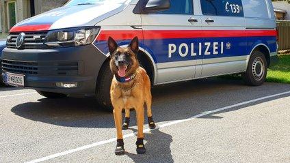 Поліцейські собаки - фото 1