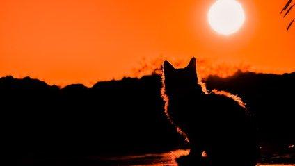 На рівнодення - день дорівнює ночі - фото 1