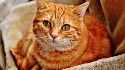 Руді коти розвеселили Reddit - фото 1