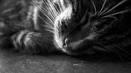 Кумедний кіт став зіркою мережі - фото 1