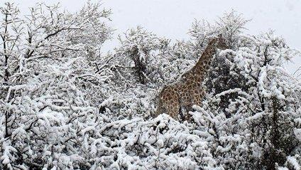 Висота снігового покриву місцями досягала 10 сантиметрів - фото 1