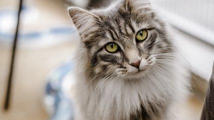 У 44 штатах США досі дозволено їсти котів і собак - фото 1