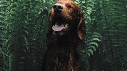 Норвежець з собакою мандрують світом - фото 1
