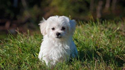 Собака-спортсмен став зіркою мережі: кумедне відео - фото 1
