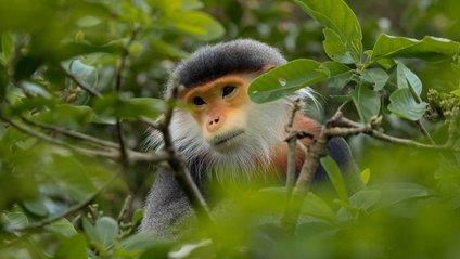Світ дикої природи у яскравих фото - фото 1