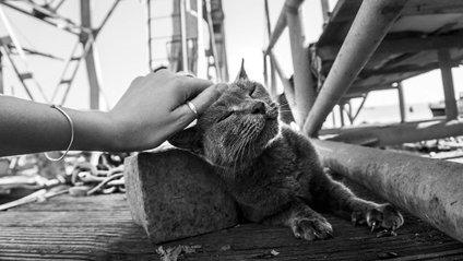 Як виглядають щасливі коти - фото 1