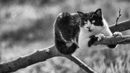 Ефектні чорно-білі фото котиків - фото 1