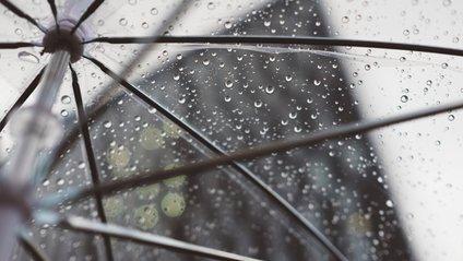 Пес з парасолькою розвеселив мережу - фото 1