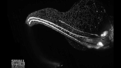 Неймовірні відео, зняті під мікроскопом - фото 1