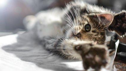 Котячі позіхання підкорили користувачів - фото 1