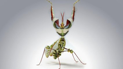 На планеті існує понад мільйон різних видів комах - фото 1