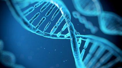 ДНК впливає на вибір університету - фото 1