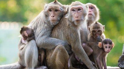 Мавпа-водій стала зіркою мережі - фото 1