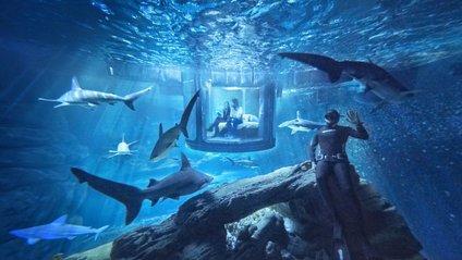 Безстрашне купання з акулами - фото 1