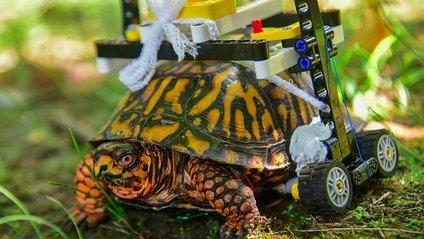Тепер черепаха може пересуватися вільно - фото 1