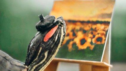 Чарівні черепахи змушують користувачів усміхатись - фото 1