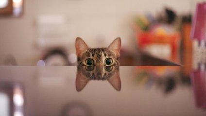 Чарівний кіт підкорює мережу - фото 1