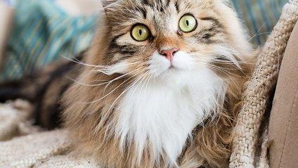 Чарівні коти, які не залишають байдужими - фото 1
