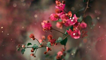 Затишні фото квітів, від яких перехоплює подих - фото 1