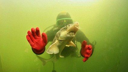 Тут відчуваєш себе у справжньому підводному царстві - фото 1