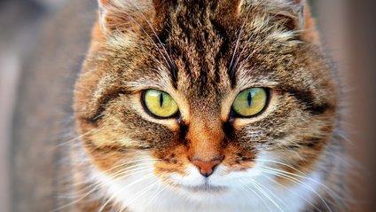 Тюремний кіт отримує свій пайок - фото 1