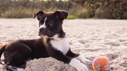 Собака-волейболіст розвеселив Reddit - фото 1