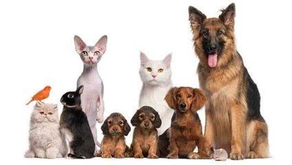 Домашні тварини лікують людей - фото 1
