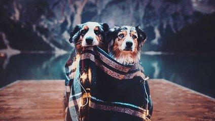 Мандрівки з собаками від талановитої фотографа - фото 1
