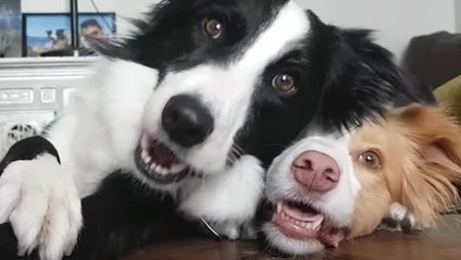 Веселі собаки розвеселили Reddit - фото 1