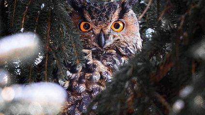 Чарівні ліси Фінляндії: казкові фото - фото 1