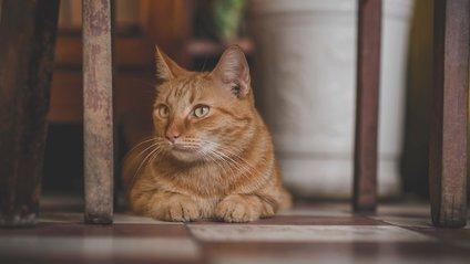 Кіт-модель підкорює Reddit - фото 1
