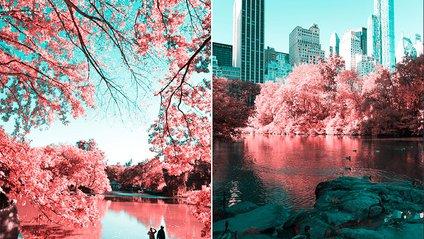 Світ в інфрачервоному світлі - фото 1