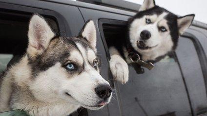 Ця буда сподобається собакам - фото 1
