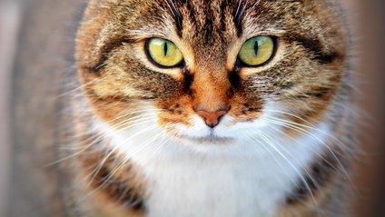 Серйозний кіт у шапці Санти - фото 1