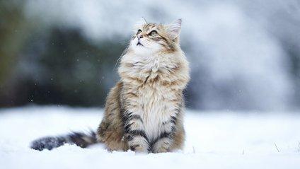 В Україні зберігається значна сніголавинна небезпека - фото 1
