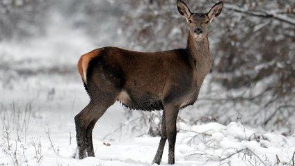 Як тварини зимують у Чорнобилі - фото 1