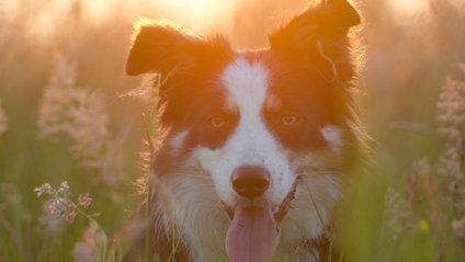 Собака, який вчить дитину стрибати, став зіркою: відеофакт - фото 1