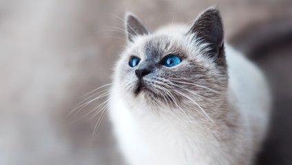 Кішка, яка вітається - фото 1