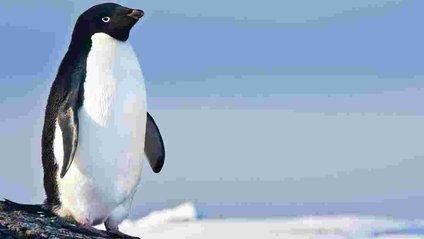 Чи стане тенденція зниження крижаного покриву в Антарктиці постійною - фото 1