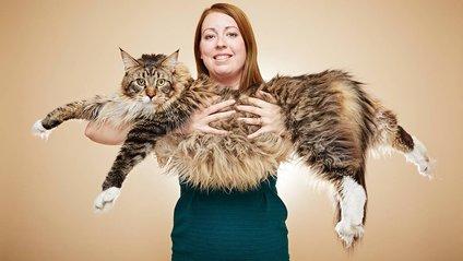 Кіт може побити свій рекорд - фото 1