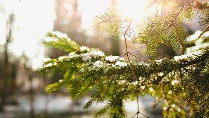 Погода на сьогодні, 8 лютого в Україні - фото 1