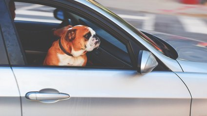 Tesla додала режим для собак - фото 1