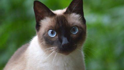 Тусовка котів розвеселила Reddit - фото 1
