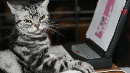 Придивіться до свого кота, адже він може копіювати вас - фото 1